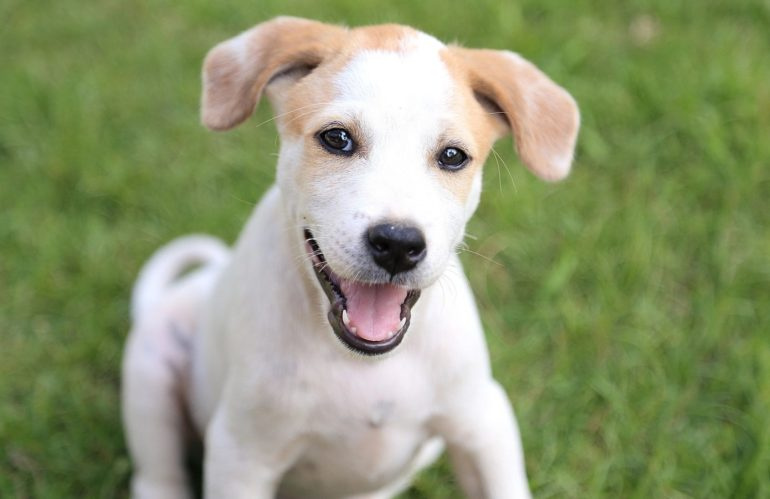 DOG LICENSES FOR 2019 NOW AVAILABLE