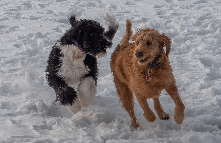 DOG LICENSES FOR 2020 NOW AVAILABLE