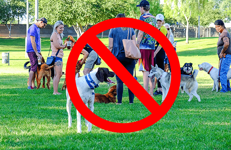 Dog Park Poll Results